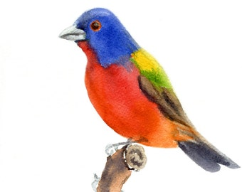 Painted Bunting 1 painted in watercolor and printed on Arches watercolor paper