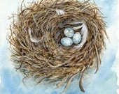 Nested-signed print of original watercolor painting of a bird's nest