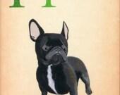 Dogs A-Z: French Bulldog