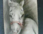 original art pencil  drawing 8x10 colt horse