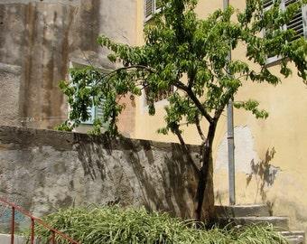Croatia Photography, Europe, European, Alleys, Streets, Coastal Living, Green, Nature