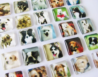 50 Puppy Dog 12mm Square Glass Cabochons Cabs Tiles Animal Lover  Ready To Use Charms