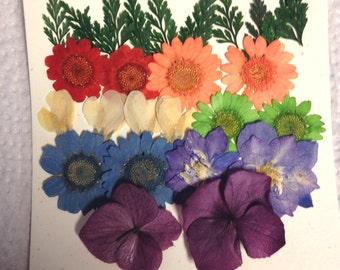 Real pressed flowers  -Designer Rainbow Pack