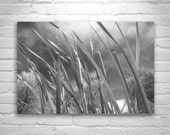 Black and White Nature Photography, Reed Art, Reed Picture, Serene Art, Peaceful Image, Cattails Picture, Windy, Wetlands Art, Wall Picture