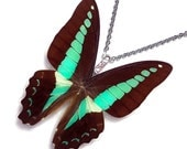 Real Butterfly Wing Necklace / Pendant (WHOLE Graphium Sarpedon aka Blue Bottle Butterfly - W121)