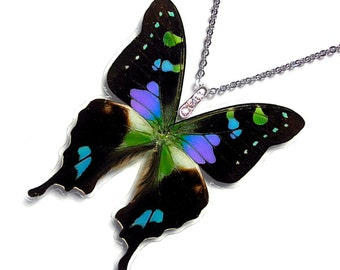Real Butterfly Wing Necklace / Pendant (WHOLE Graphium Weiskei Purple Spotted Butterfly - W019)