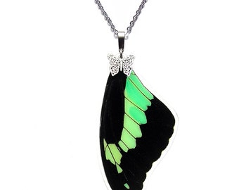Real Butterfly Wing Necklace (Papilio phorcas forewing - N054)