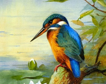 kingfisher by Archibald Thorburn vintage nature art bird tree wildlife- pdf cross stitch pattern  - INSTANT DOWNLOAD