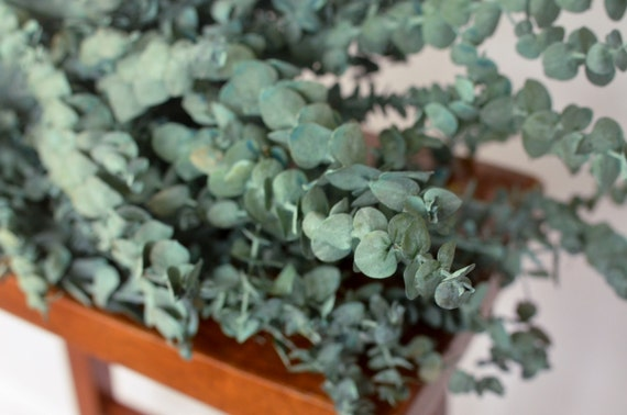 Image result for images eucalyptus and sage