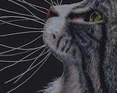 Tabby Cat Profile Art Note Card