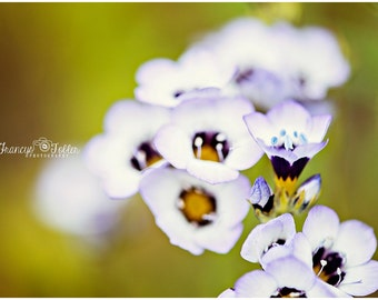 Spring White and Purple Blossoms Flower Fine Art Canvas wrap- macro