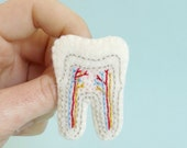 Tooth Cross Section Brooch small size