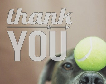 Pit Bull Thank You card