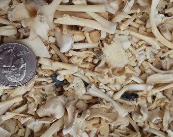 Real Domestic Rabbit Bones Grab Bag - 4 Ounces - Assorted - Stock No. RBGB