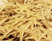 "15 Natural Starfish 1"" - 1.75"" starfish crafting beach decor beach parties beach weddings"