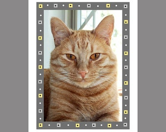 Orange Tabby Cat Card Photo Card Cat Photography Orange Cat Ginger with Fancy Border