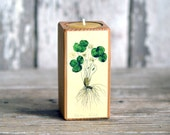 Colored Botanical Candleblock: No. 3, Smokestack Clover - by Peg and Awl