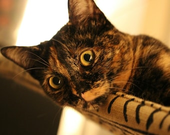 Jute Burlap - Curious Cats Window Perch