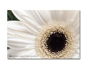 Gerbera Daisy Cream Floral Brown Home Decor Spring Flower Print Gift for Her 8x10 Print