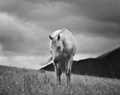 Dramatic Horse Photograph in Black and White, Horse Photography