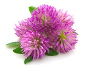Red Clover Honey Leave-In Conditioner - Natural Hair Conditioner, Curly Hair, Kinky Hair, Natural Hair