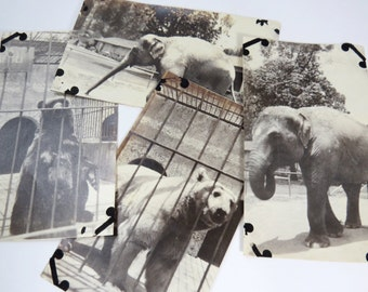 Zoo Bear Elephant Snapshots Photos, Vintage 1930s, Scrapbook, Altered ART, Fun for Kids