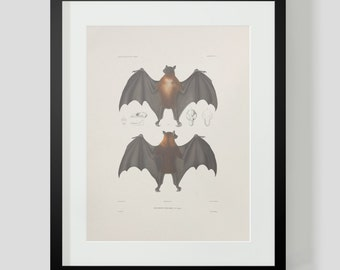 Vintage Bat Print