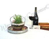 "TERRARIUM - ""Hyperbola"" - Wine Barrel Head Terrarium - 100% recycled"