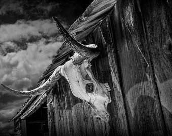 Texas Longhorn Steer Skull on an Old Wood Barn in the Southwest Either Black & White or Sepia No.BW02521 Western Animal Fine Art Photography