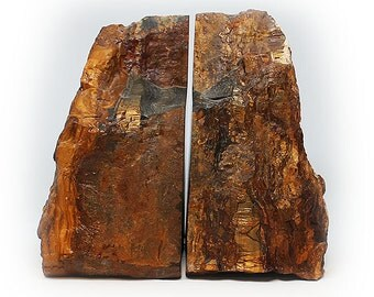 Gorgeous Set of Petrified Wood Bookends
