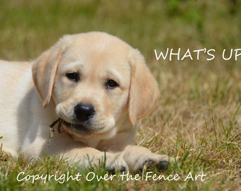 Dog Photograph Dog Card Yellow Labrador Portrait