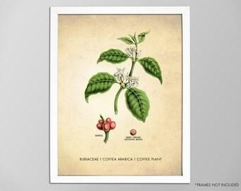 Coffee Art Print, Kitchen Art Print, Coffee Poster, Coffee Plant Botanical Print, Coffee Tree, Coffee Plant Art Print, Kitchen Decor Print