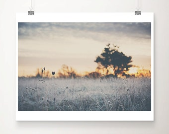 winter frost photograph tree photograph sunrise photograph nature photography landscape photograph silver home decor tree print