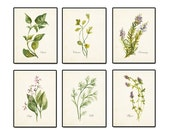 Watercolor Herbs Print Set 2 - Botanical Print - Giclee Canvas Print -  6 Herb Prints - Posters - Kitchen Art - Multiple Sizes Available