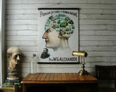 Vintage Phrenology Pull Down School Science Chart Reproduction with Canvas Print and Oak Wood and Brass Hanger