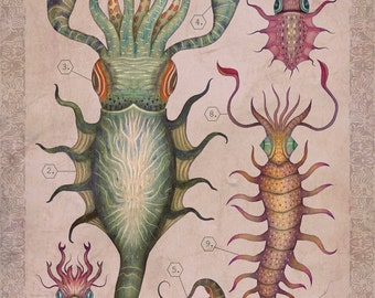 Cepharthropoda I - A4 art print
