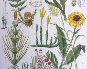 Rare Antique 1890s Victorian Bookplate Chromolithograph PLANT LIFE Botany Toadstool Fungi Funghi Botanical Plants Sunflower Fern Home Decor