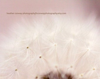 Dandelion Spring Glow, Cream, Bokeh, Whimsical signed print, Nursery Art - Fine Art Photography
