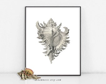 CONCH SHELL - digital download - printable antique illustration retooled by Anamnesis - image transfer - totes, pillows, prints, clothes