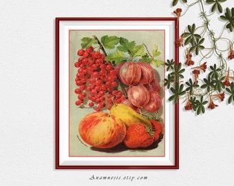 FRUIT MEDLEY - digital download - printable antique illustration retooled by Anamnesis for prints, totes, cards, kitchen art etc.