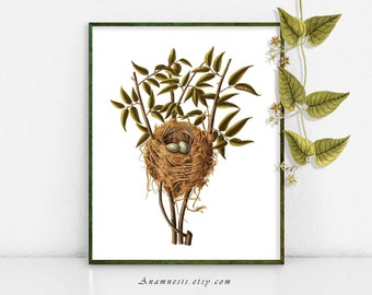 NEST in LEAFY BRANCHES - Printable Instant Download - 1800's bird nest illustration for framing or totes, cards, scarves etc. - nature art
