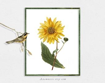 SUNFLOWER - digital download - printable antique flower illustration for framing, totes, nursery, kitchen, t-shirts etc.- lovely wall decor