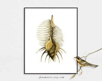 SPINY SEA SHELL - digital image download - printable antique ocean illustration for framing, cards, totes, wall decor, bathroom art, etc.