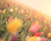 Landscape Photography | Flowers | Floral Photo |Tulips | Soft Colors | Hazy Sunlight | Oregon