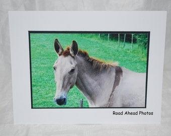 Photo card, Horse photography