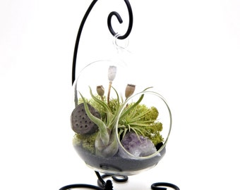 "Air Plant Terrarium Kit with Purple Amethyst / 6"" Oval Glass / Midnight Forest  / 6"" Oval"