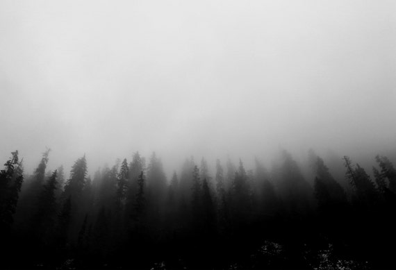 forest photography print / black and white nature art print