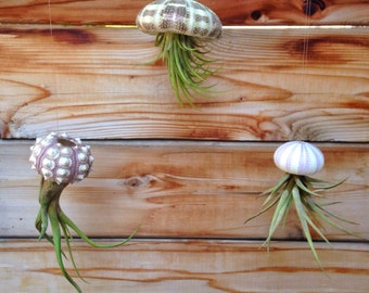 Set of Three Hanging Air Plant Jellyfish - A Unique Mothers Day or Birthday Gift