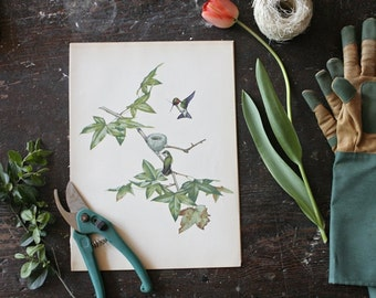 Vintage 1950's Bird Print Bookplate -  Menaboni's Birds, Ruby-Throated Hummingbird Bird Print, Summer Home, Bird Illustration, Green Home