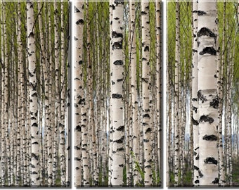 Framed Huge 3 Panel Art Spring Tree Birch Forest Giclee Canvas Print - Ready to Hang
